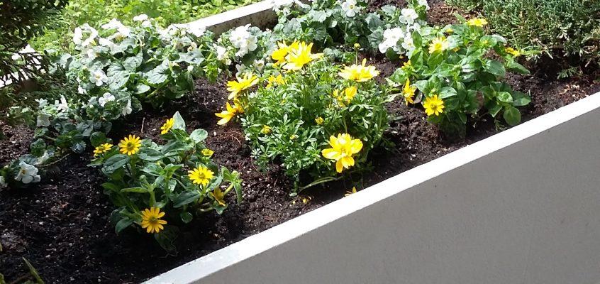 Hausmeisterservice – Gartenpflege – Bepflanzung von Balkonkästen und Balkontrögen