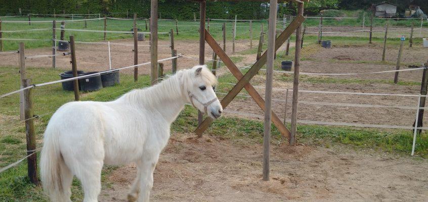 Hausmeisterservice – Erstellen eines Sonnenschutzes bzw. Unterstandes für ein kleines Pferd oder Pony