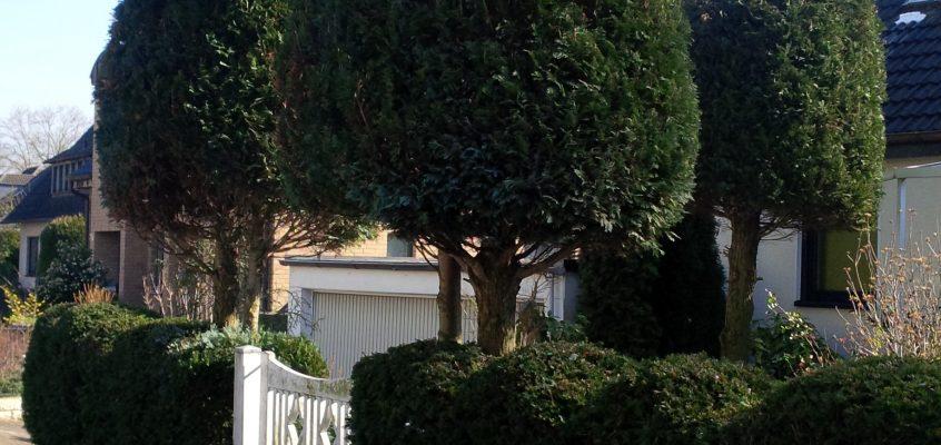 Gartenpflege – Baumschnitt – Baumformschnitt