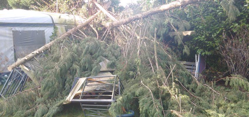 Gartenpflege – Beseitigung eines Sturmschaden – Großer Konifere / Lebensbaum