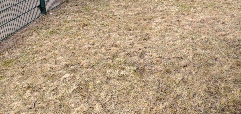 Hausmeisterservice – Gartenpflege – Hohes trockenes Gras mähen – Beseitigung einer Brandgefahr (Gefahrenstelle)