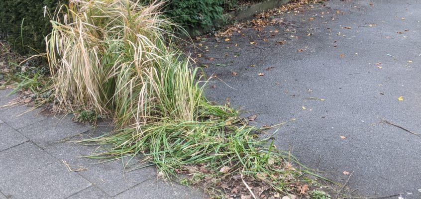 Hausmeisterservice – Gartenpflege – Wohnungsauflösung – Unkrautentfernung auf dem Parkplatz