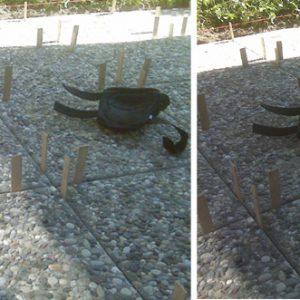 Anhebung abgesenkter Gehwegsplatten