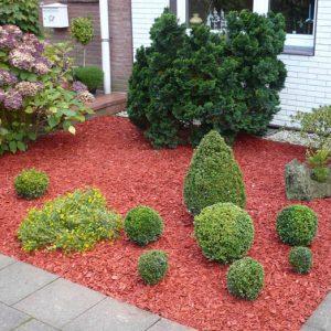Vorgarten mit gefärbten Mulch und Buchsbaumgruppe