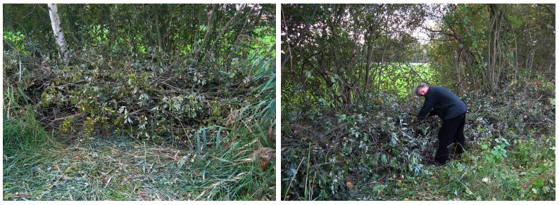 Weiden einflechten: Naturhecke aus Weiden in Weidenbüsche einflechten